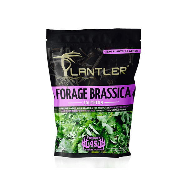 4S Plantler Forage Brassica Southern Mix, 8 lbs.