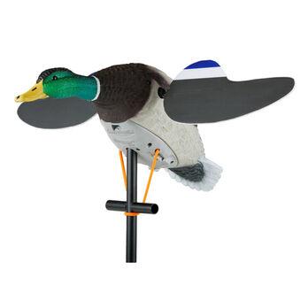 Lucky Duck Lucky Junior II