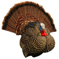 Zink Calls Avian-X LCD Strutter Turkey Decoy