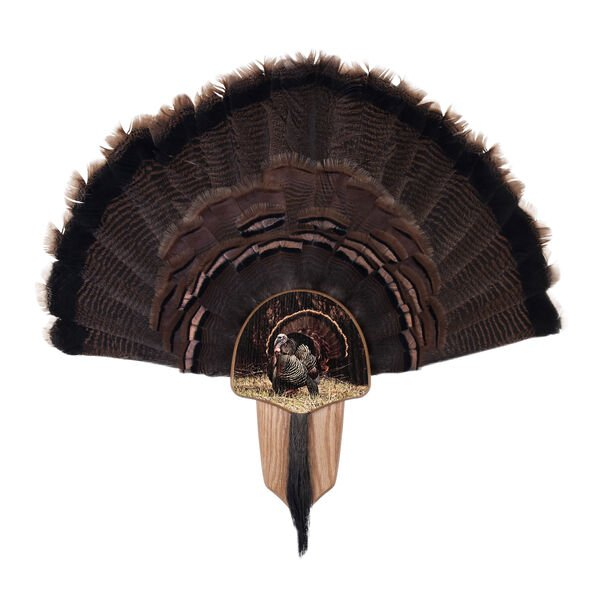 Walnut Hollow Turkey Display Kit Mount with Strutter Image