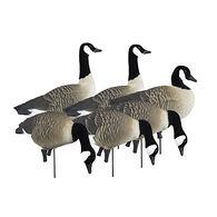 Higdon APEX Full-Size Canada Goose Variety Decoys, 6 Pk.