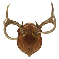 Walnut Hollow Deluxe Antler Display Kit, Solid Walnut
