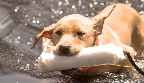 Dog Training & Supplies